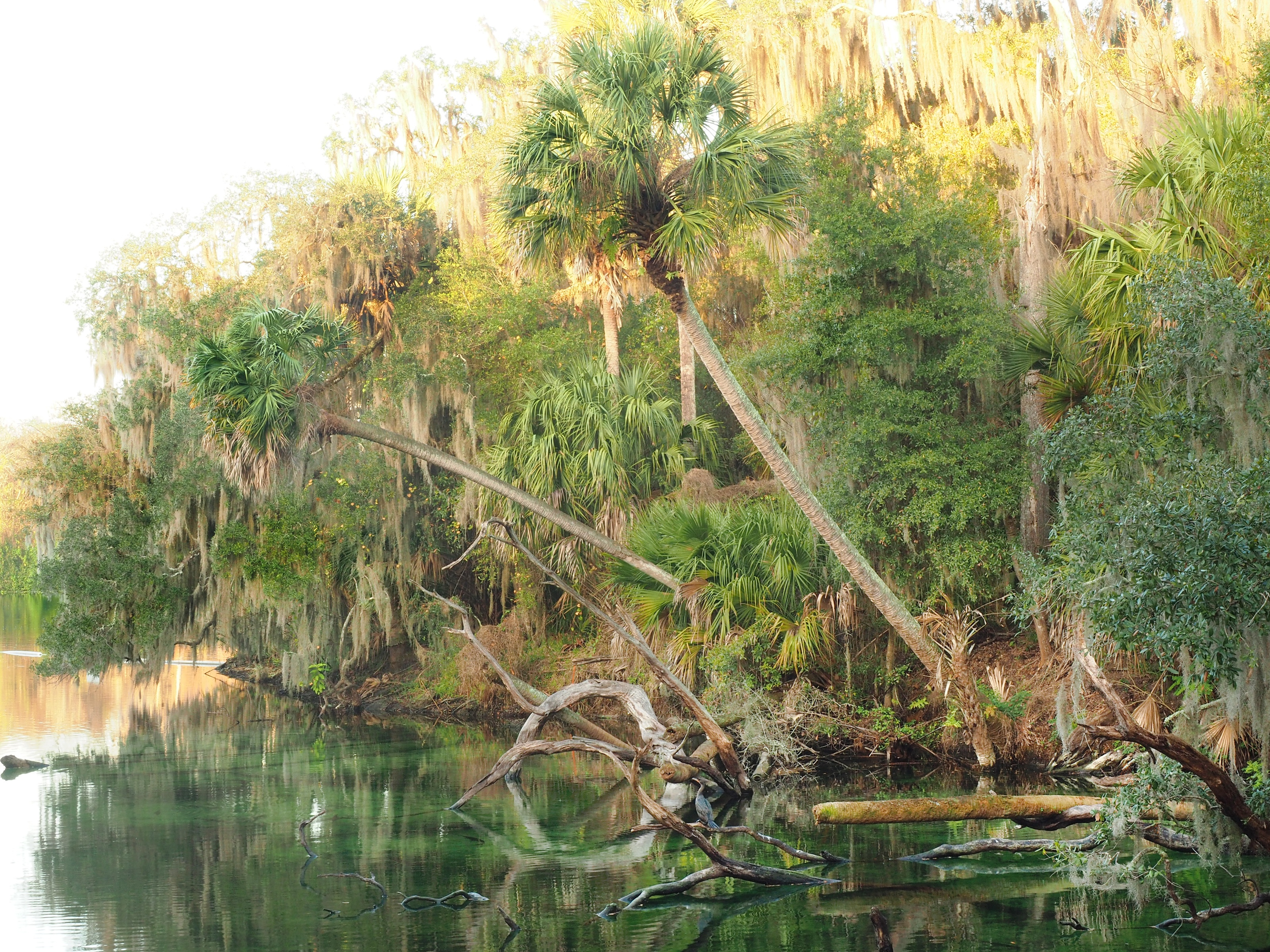 Florida springs prove to be one of the best weekend destinations
