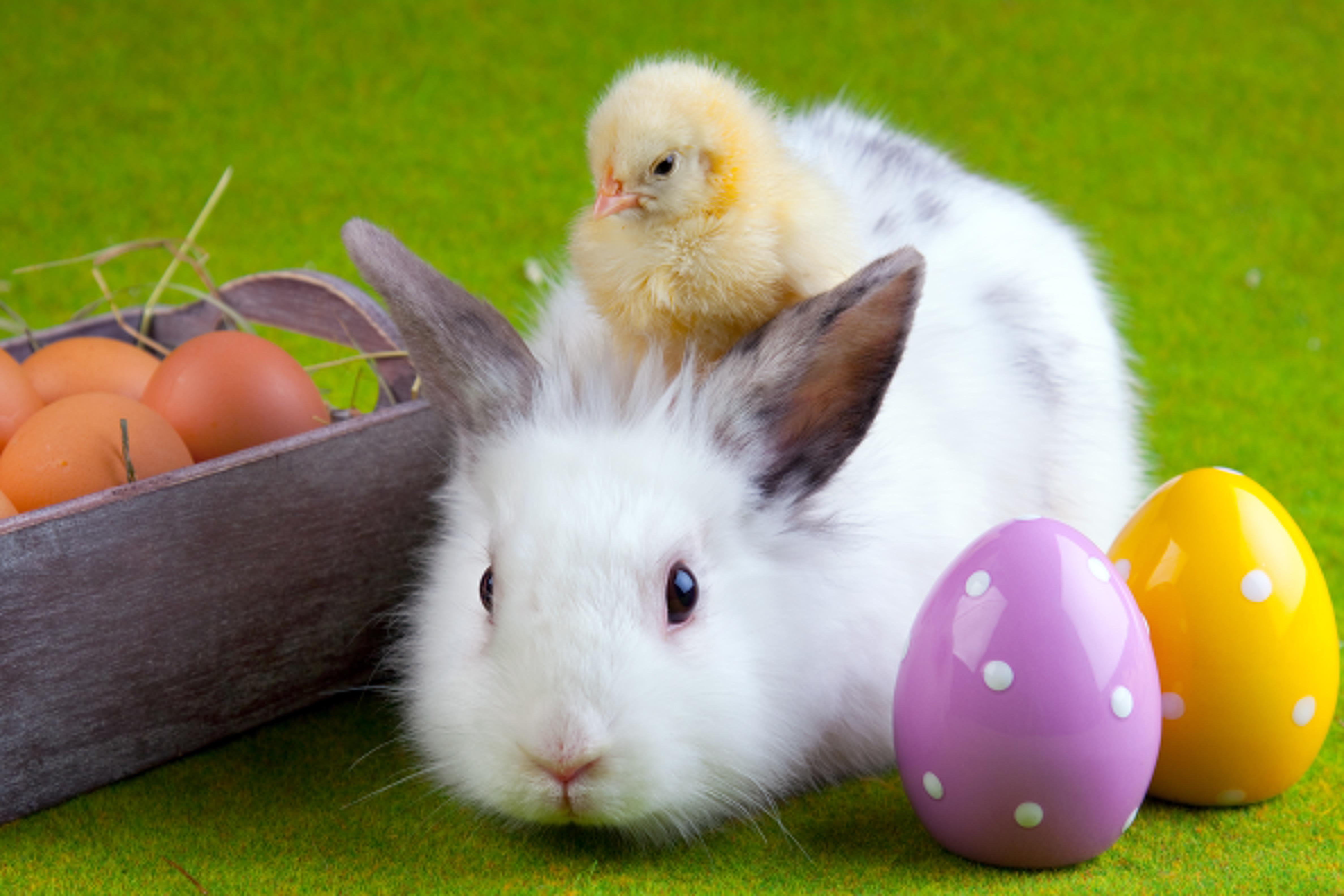 Eggcellent Easter Memories