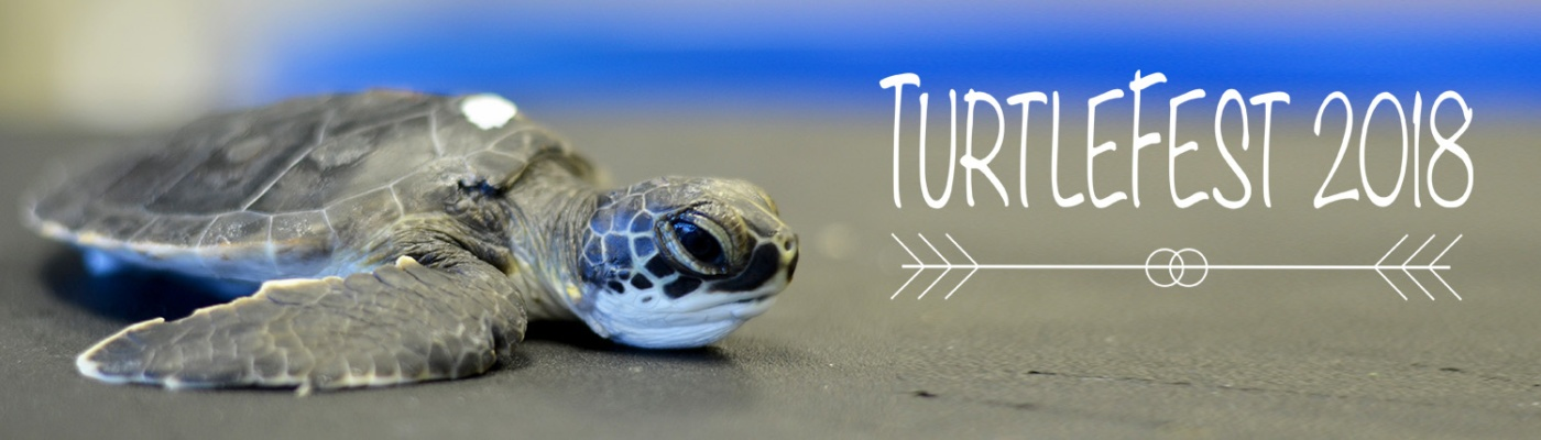 TurtleFest_header-1400x400