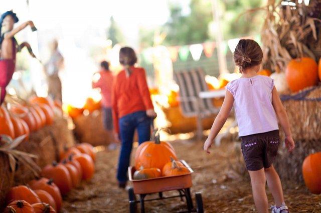 pumpkin-w640.jpg